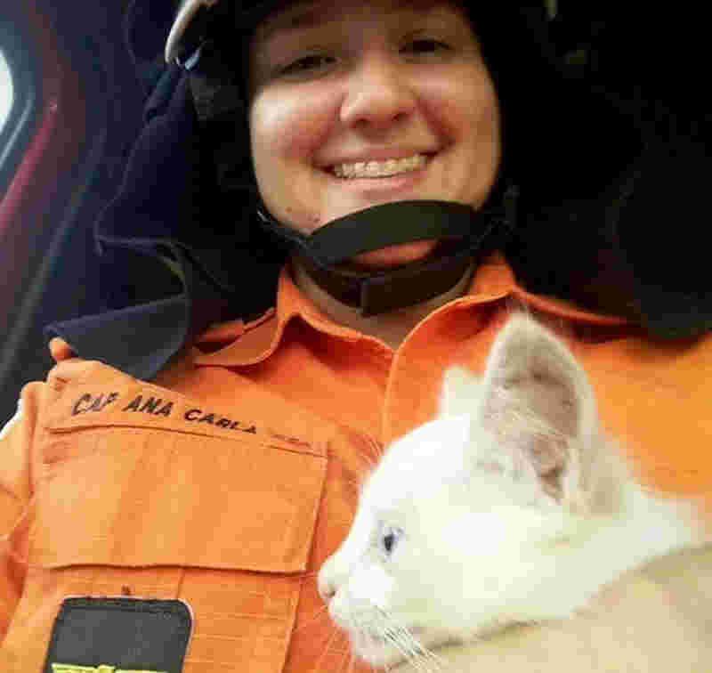 Capitã Ana Carla Lima adotou gato que caiu em fossa na parte alta de Maceió (Foto: Ana Carla Lima/Arquivo pessoal)