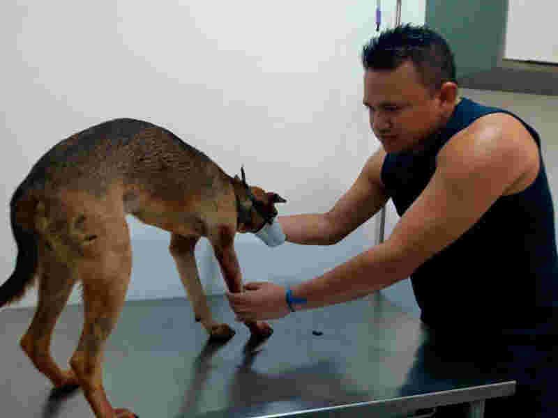 Segundo a polícia, o criminosos feriu animais a tiros por dois dias seguidos.