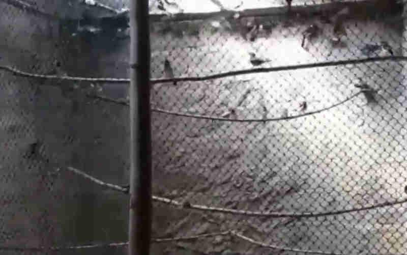 Aves foram resgatadas de aviários ilegais (Foto: PRF/Divulgação)