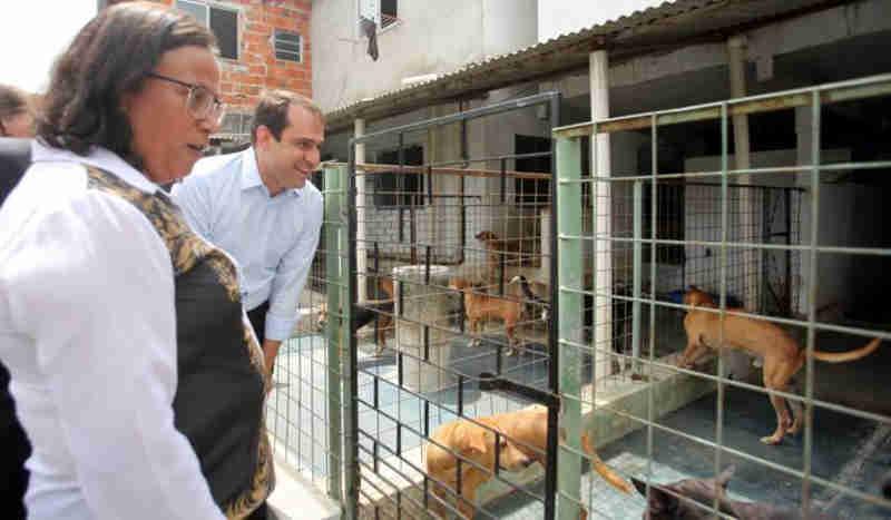 Prefeitura de Fortaleza (CE) investirá em abrigo para animais