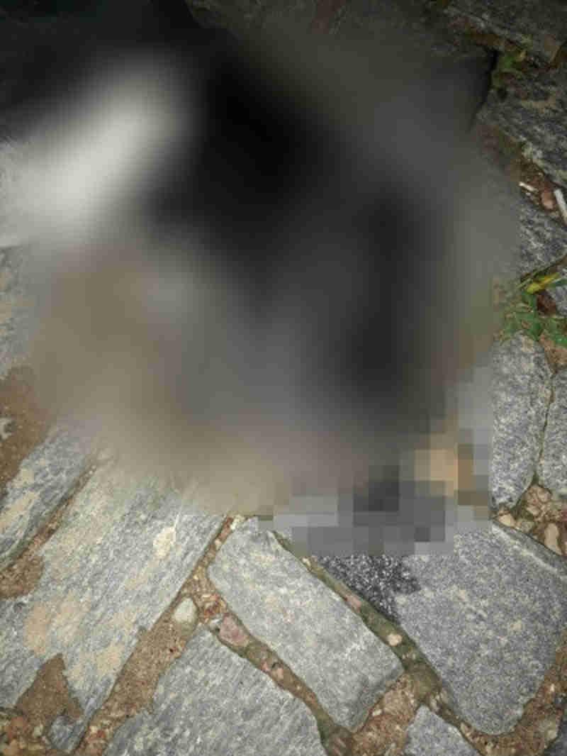 Um dos animais envenenado foi encontrado morto. (Foto: Sertão Informa)