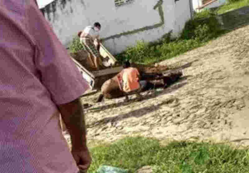 Cavalo não aguenta peso de carroça e cai, em Madalena, CE
