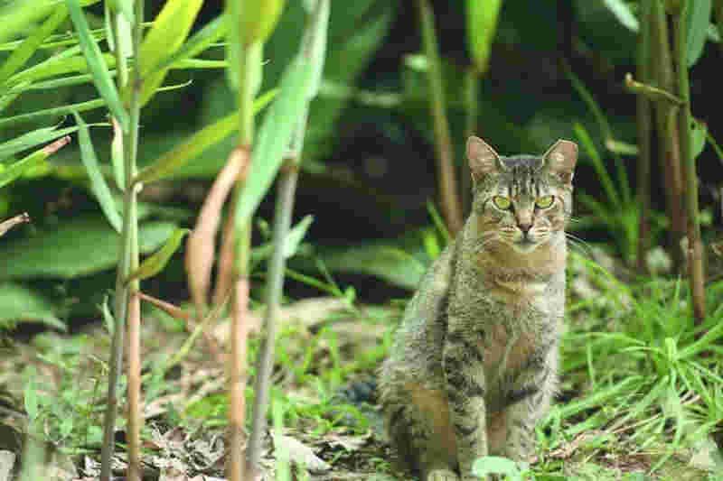 Está previsto um investimento de R$ 132 mil para colocar o plano de manejo dos gatos em prática (Foto: Fred Magno)