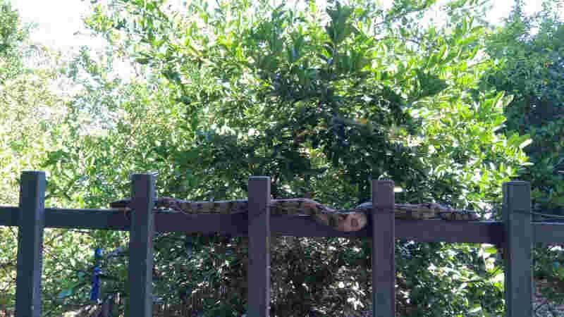 Moradora se assusta com cobra no quintal (Foto: Arquivo Pessoal)