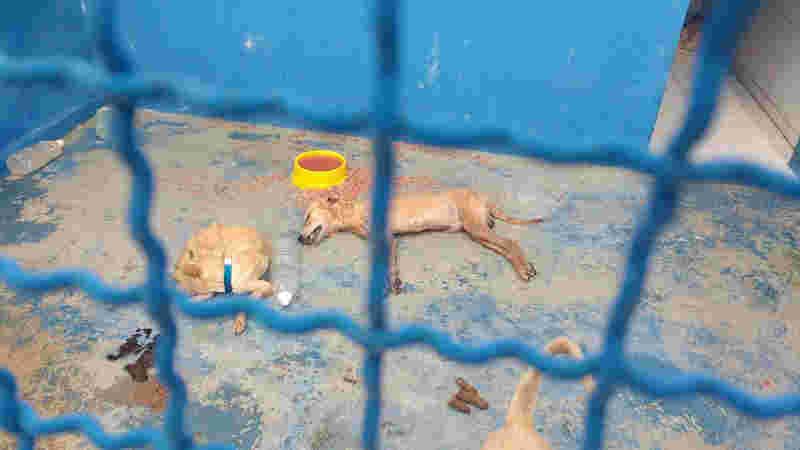 Prefeitura de Sousa (PB) é acusada de maus-tratos a cães; veja fotos