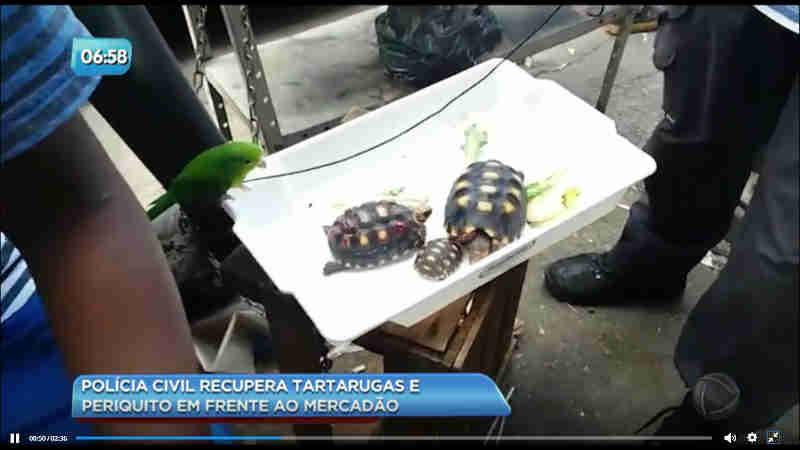 Polícia Civil apreende menor que vendia animais silvestres em Madureira, RJ