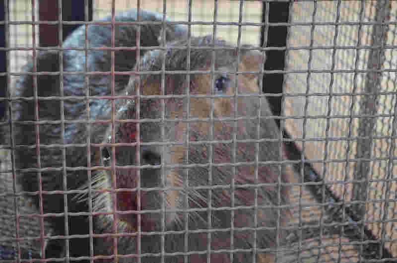 Animal apresentava ferimentos no focinho e nas patas (Foto: Eliete Marques)