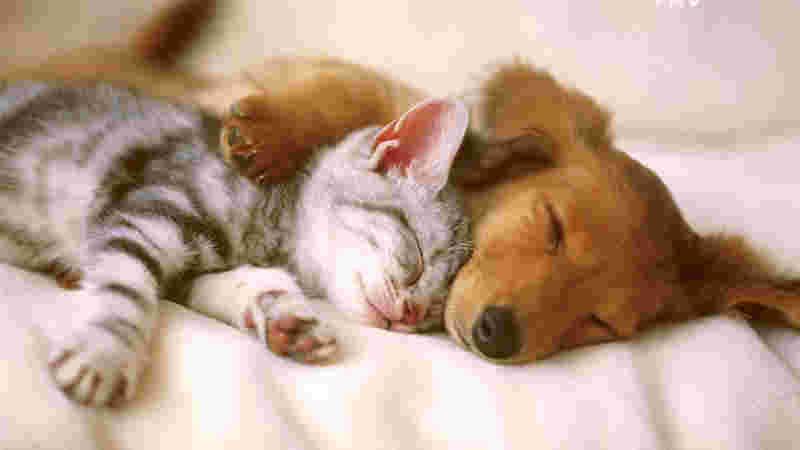 RS: Associação Torrense de Proteção aos Animais divulga dados sobre última campanha de esterilização