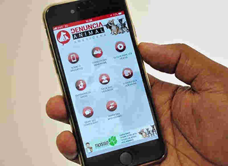 Americana lança aplicativo para denúncias de maus-tratos aos animais . (Foto: Marilia Pierre)