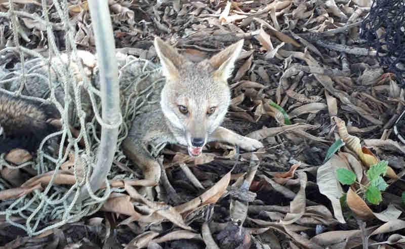 Animal foi visto dentro do campus de uma universidade em Bauru (SP) (Foto: Corpo de Bombeiros)