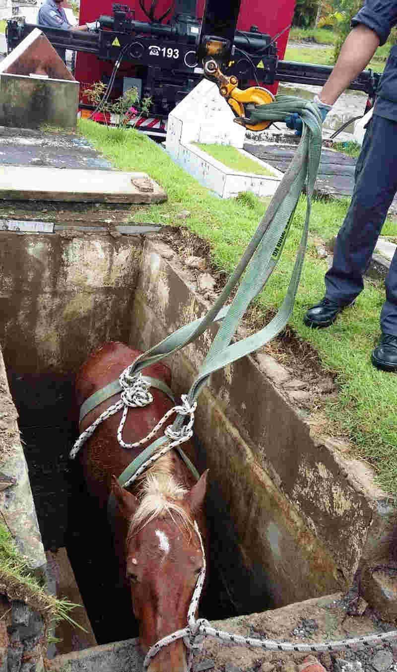 Cavalo foi resgatado com auxílio de um guidaste do Corpo de Bombeiros, em Guarujá, SP (Foto: G1 Santos)