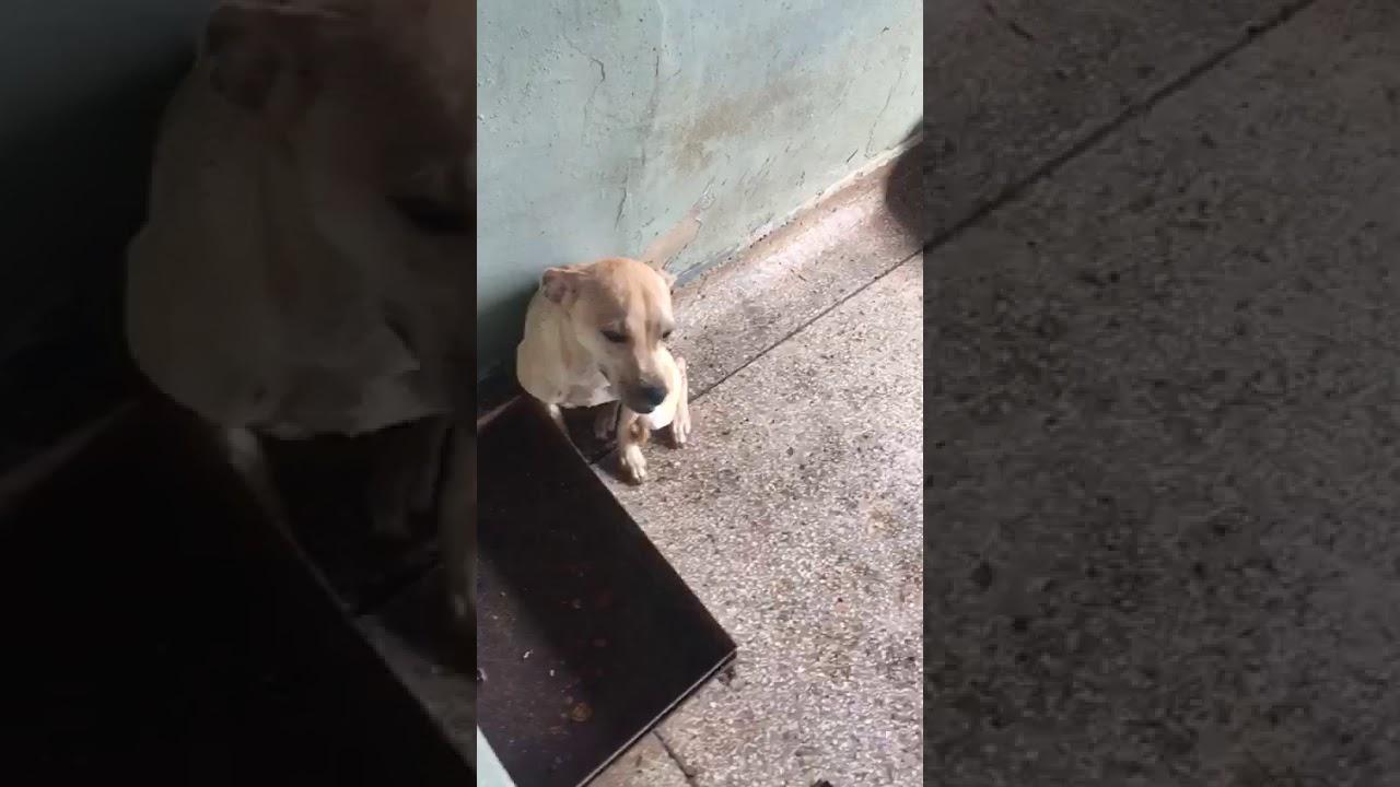 Mulher morre de infarto em Anápolis (GO) e deixa 15 cãezinhos que agora precisam de adoção