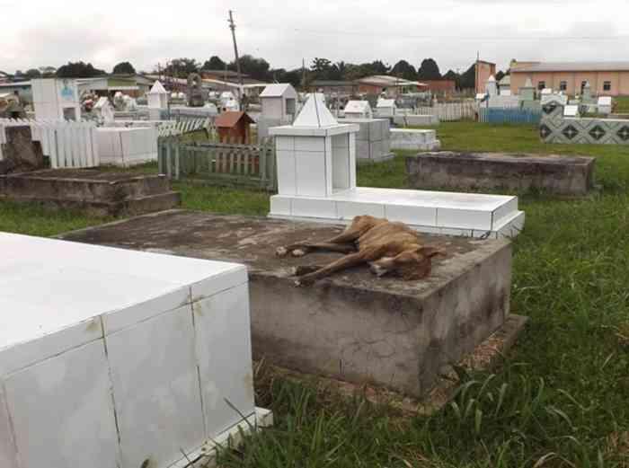 Cão espera em cima de túmulo por tutor que morreu no Acre; animal não quer mais comer