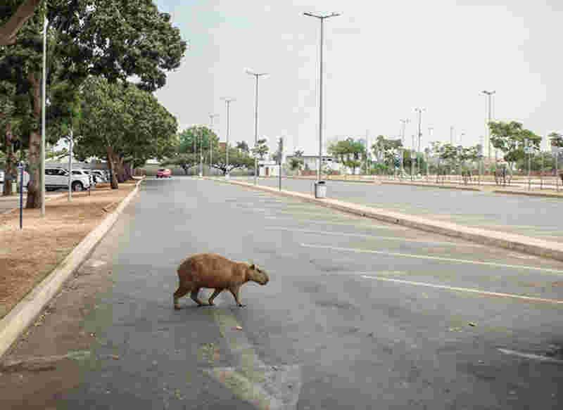 Morador do bairro Novo Horizonte pede proteção para animais silvestres em Macapá, AP