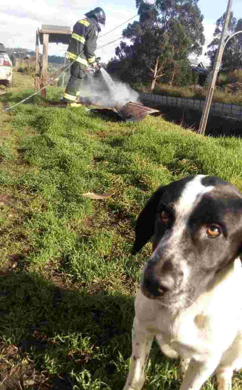 A triste reação de um cachorro de rua que teve sua casa queimada