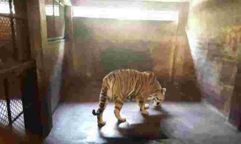 Devido a maus-tratos, 54 animais são resgatados do zoológico
