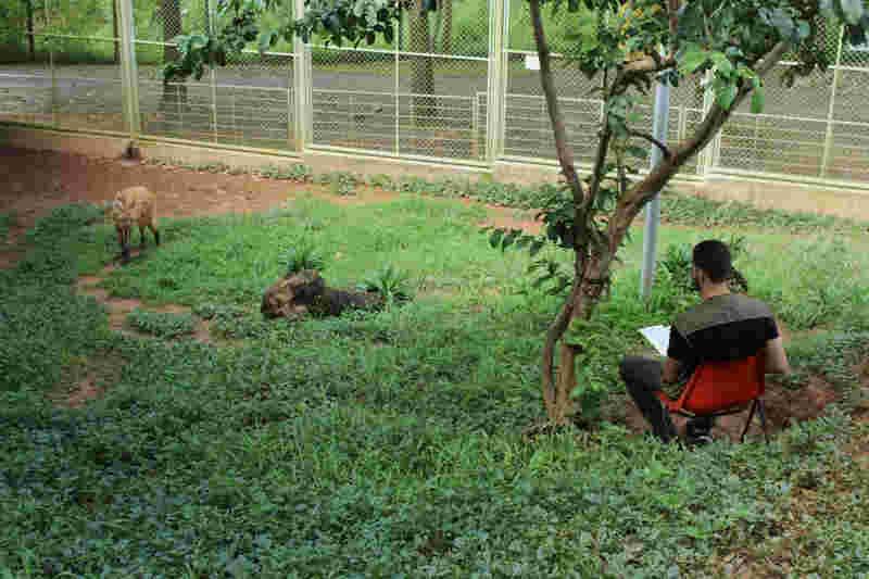 Diariamente, Lobinha ouve histórias de clássicos literários lidas por estudantes (Foto: Assessoria Usipa/Divulgação)