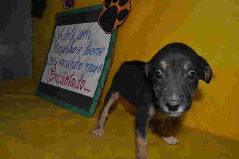 Ouro Preto, MG: campanha de adoção de cães na Praça da Estação nesta sexta