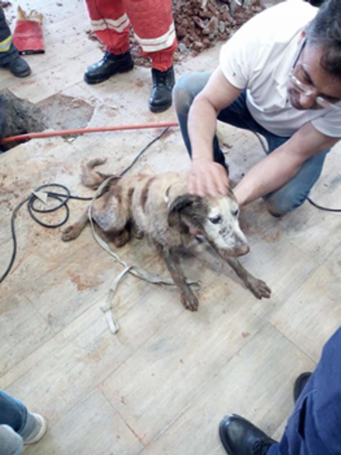 Teve de se abrir um buraco no pavimento do edifício da junta de freguesia de A-dos-Francos para salvar os animais.