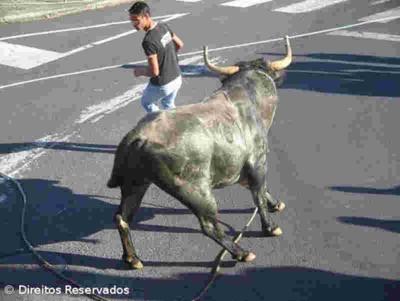 Petição junta mais de quatro mil assinaturas contra as touradas à corda nos Açores, em Portugal