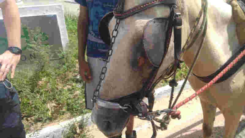 Flagrante ocorreu no exato momento em que o condutor da carroça realizava um açoite ao animal.