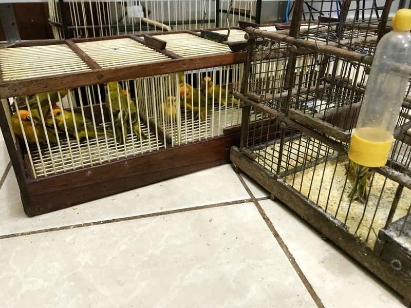 Os 13 animais silvestres aprendidos estavam em gaiolas dentro de uma picape nesta terça (15) (Foto: Alan Chaves/G1 RR)