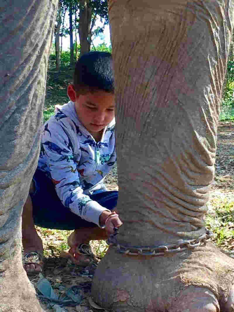Fotos: Boon Lott's Elephant Sanctuary/Facebook
