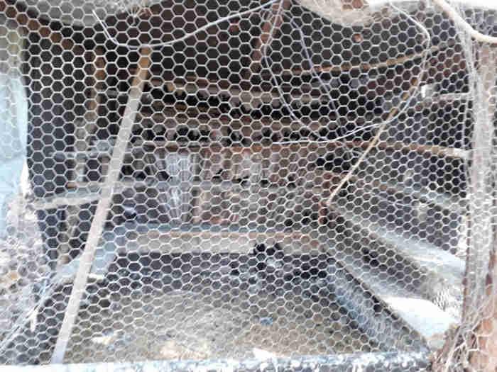 Aves foram encontradas em um viveiro e em gaiolas. (Fotos: PM Ambiental / Divulgação)