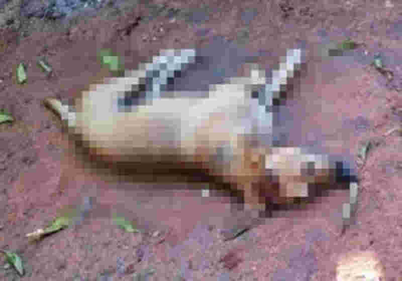 Acusado de matar cachorros a facadas é preso pela polícia de Sapucaia, PA