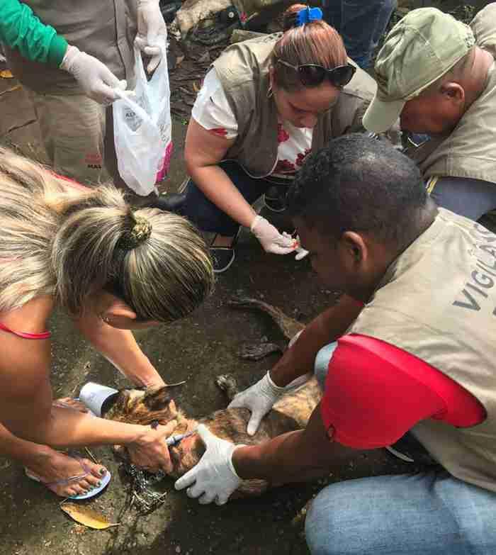 Intenção do MPE é encontrar medidas preventivas para evitar que mais cães sejam sacrificados em Macapá (Foto: Nayma Picanço/Arquivo Pessoal)