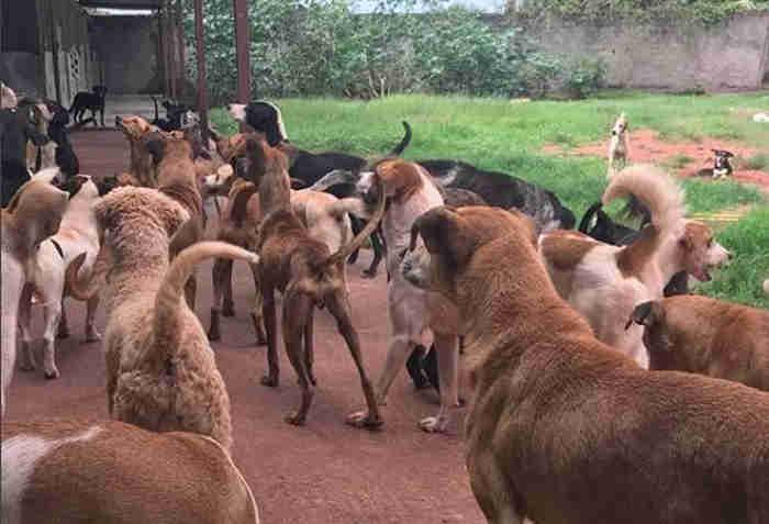 Abrigo de animais carentes em Vila Velha sofria com reclamações de vizinhos. (Foto: @animaiscarenteses)