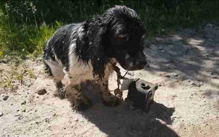 Cachorro abandonado encontrado em estrada (Crédito: Facebook/Reprodução)