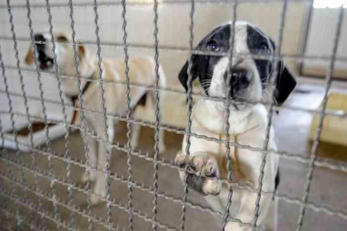 Ajuda é para proteger animais do frio em BH - Foto: REPRODUÇÃO/EBC