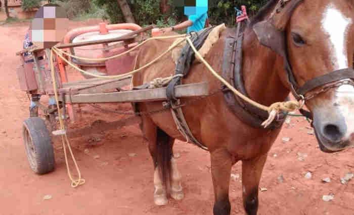 Carroceiro é flagrado pela PMA praticando maus-tratos a cavalo em Aquidauana, MT