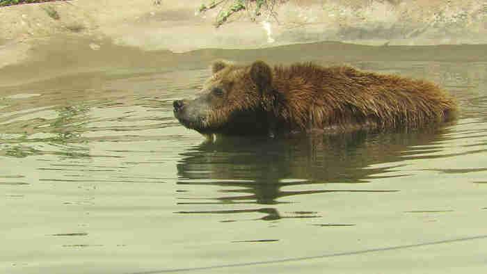 Ursa Marsha. (Foto: Divulgação Semar)
