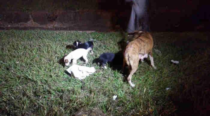 Filhotes de cães são resgatados de tubulação pelos Bombeiros em Londrina, PR