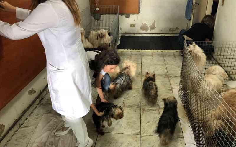 Polícia resgata mais de 100 cães das raças yorkshire e maltês em canil clandestino na Zona Sul de SP