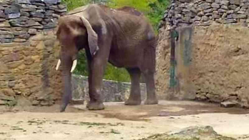 Ruperta era a estrela do zoológico de Caricuao. Foto: DR