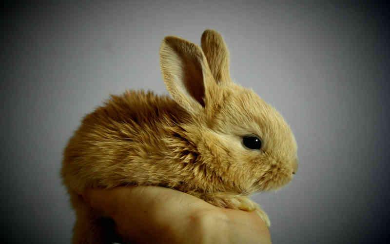 70% das empresas de cosméticos do Brasil estão localizadas em regiões que proibiram os testes em animais!