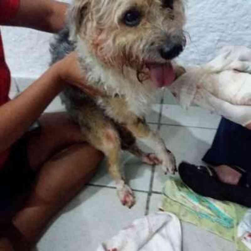 Cão é atropelado na Jatiúca - Foto: Reprodução/WhatsApp