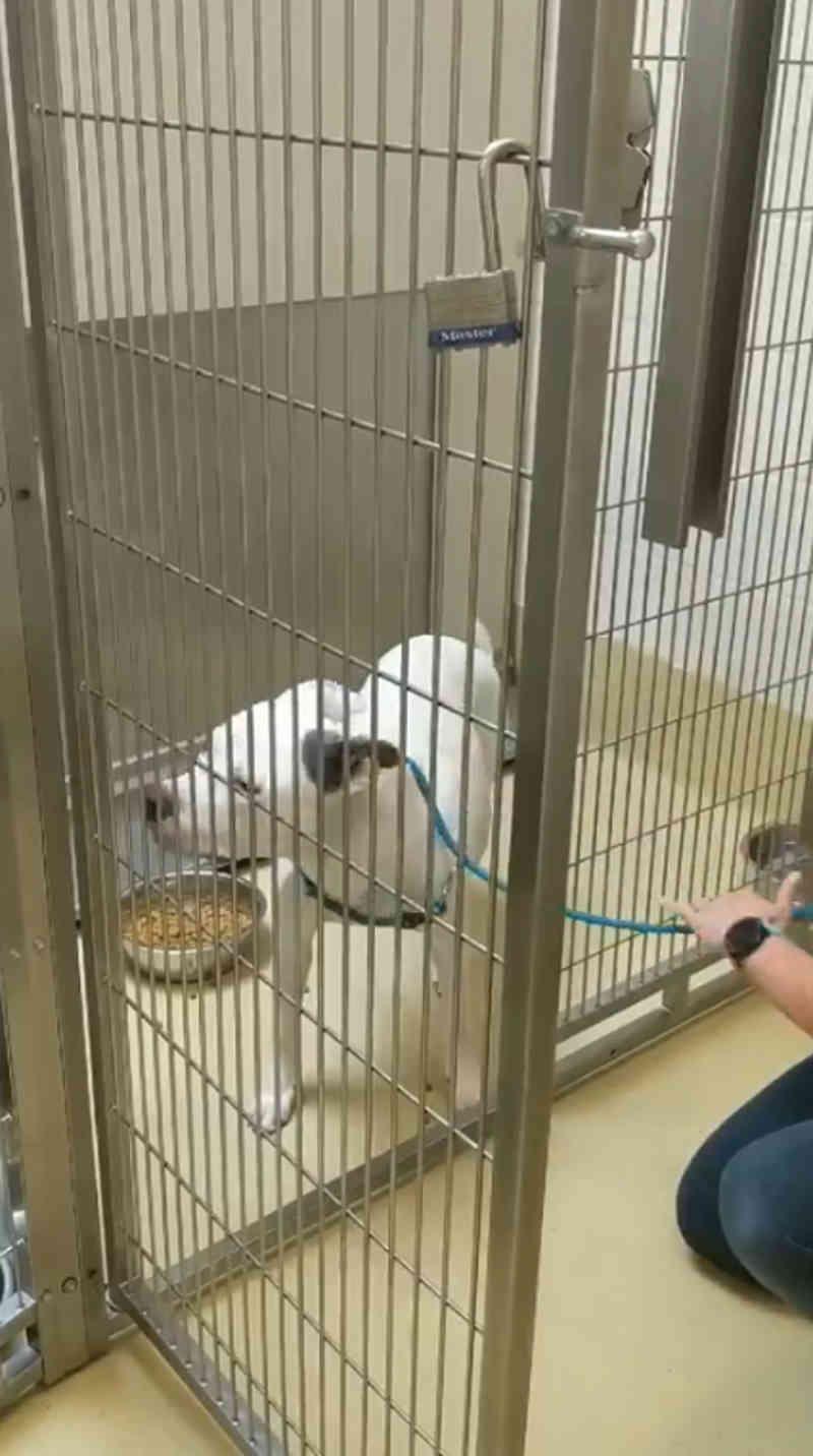 Assistir a uma cachorra assustada de um abrigo sair de sua jaula pela última vez e escapar da morte fará você ganhar o dia