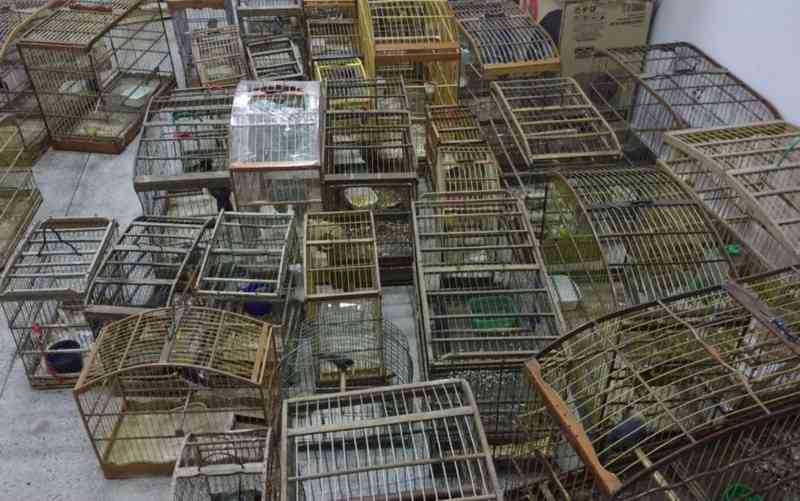 Inema apreende 500 pássaros durante operação contra tráfico de animais silvestres na Bahia
