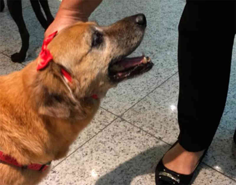 """A cadela idosa """"Marieta"""" é um dos animais idosos que estão para adoção na ABPA."""