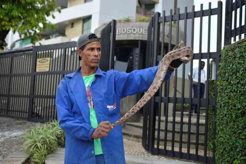 Jiboia foi encontrada em frente ao condomínio Pedra do Bosque, na Federação, no último dia 16 - Foto: Shirley Stolze | Ag. A TARDE
