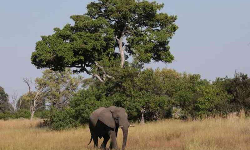 Filhote de elefante em Okavango Delta, Botswana - 25/04/2018 (Mike Hutchings/File Photo/Reuters)