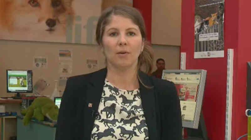Canadá: Estudo afirma que para 70% dos moradores de Quebec o direito dos animais é um tema de peso nas eleições