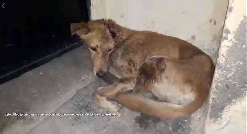 Cão de rua ferido se escondeu em um canto esperando morrer, até que uma pessoa bondosa finalmente o ajudou