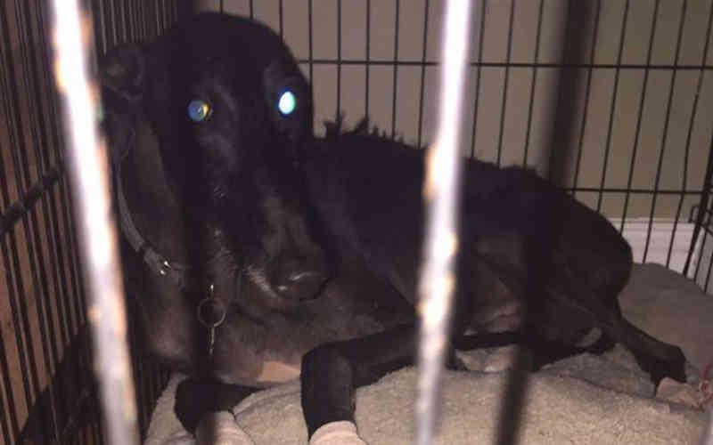 Cão que arrancou 'almofadas' de suas patas depois que o vizinho soltou fogos de artifício nos lembra que nem todo mundo gosta desses espetáculos
