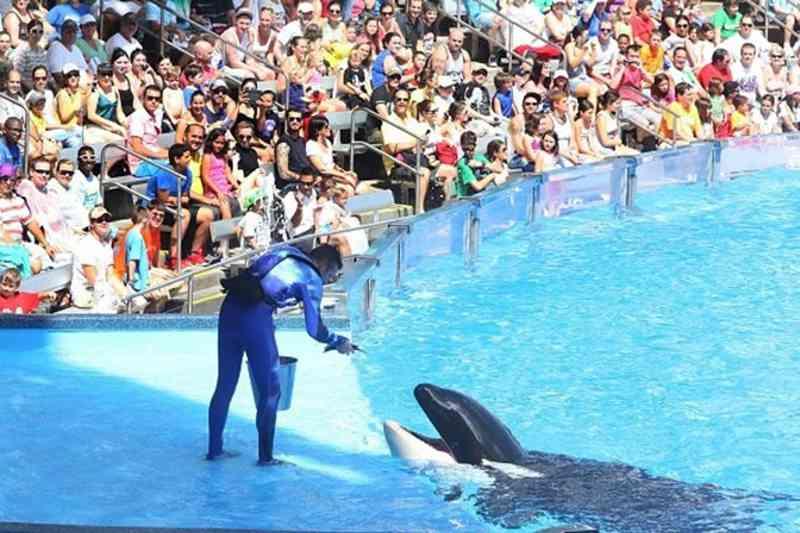 Companhia de viagens pára de vender bilhetes para SeaWorld