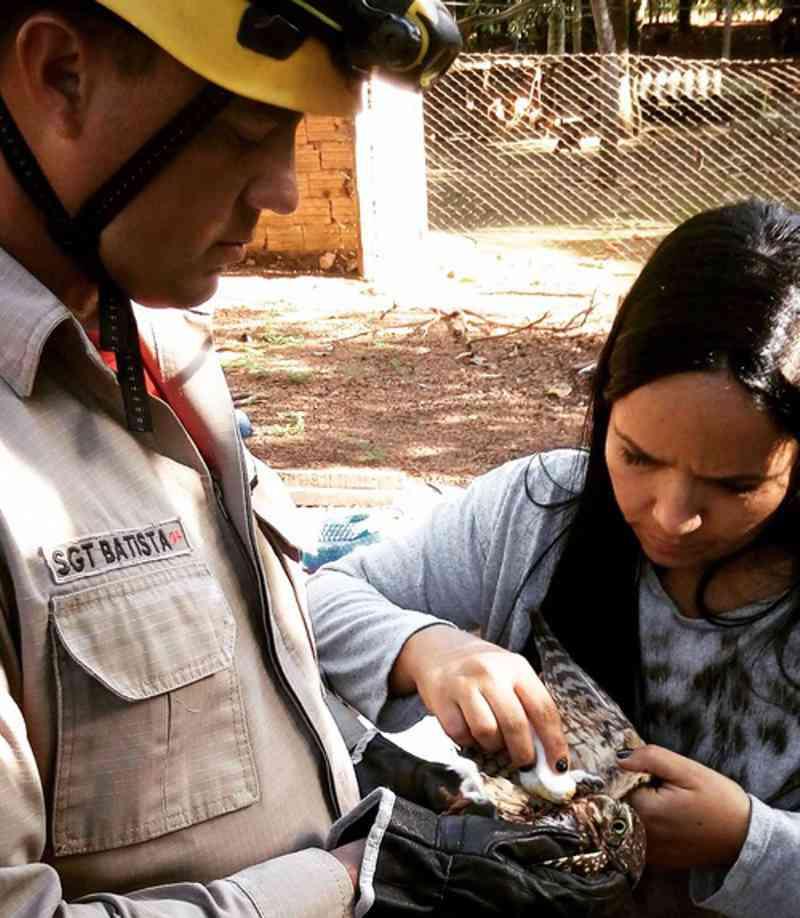 Vergonha! Centro de reabilitação de animais selvagens é fechado por falta de recursos em Anápolis, GO